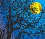 Filiali e la luna Fotografie Stock