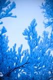 Filiali nevose di tono blu Immagini Stock Libere da Diritti