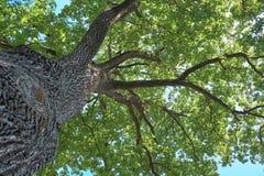 Filiali superiori dell'albero Fotografie Stock