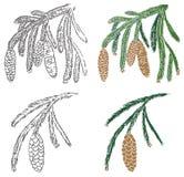 filialkotten sörjer spruce Arkivfoton