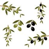 filialolivgrön Arkivfoto