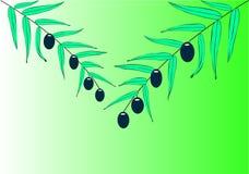 filialolivgrön två stock illustrationer