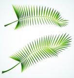 filialpalme vektor illustrationer