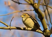 filialsparrowtree Fotografering för Bildbyråer