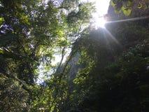 filialstrålar sun treen Royaltyfri Fotografi