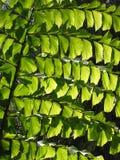 filialtree royaltyfria bilder