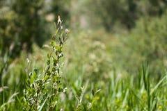 Filialväxter i natur Arkivfoton