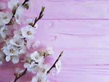 Filialvår för körsbärsröd blomning på en rosa träbakgrund arkivfoton