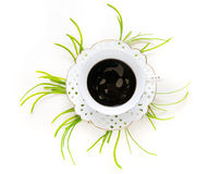Filiżanka kawy i rośliny Obraz Stock