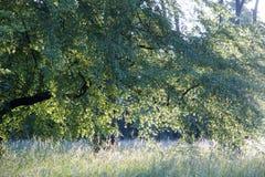 Filigraanavondatmosfeer Stock Foto