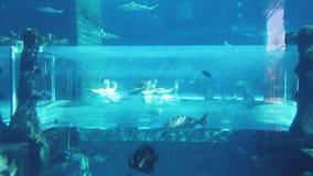 Filigrana de Aquaventure en Dubai almacen de video