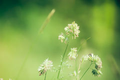 Filigree grass plant. S in summer Royalty Free Stock Photo