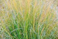 Filigree grass texture Stock Images