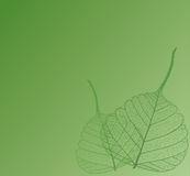 Filigree leaf, illustration Royalty Free Stock Images