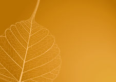 Filigree leaf, illustration Royalty Free Stock Photo