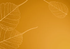 Filigree leaves, illustration Stock Photos