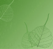Filigree leaves, vector Royalty Free Stock Image