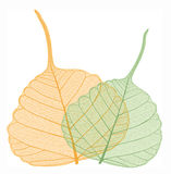 Filigree leaves, vector Stock Photo