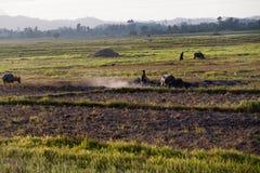 Filipiński rolnik i jego bizon na sposobie ryżowy pole w El Nido, Filipiny Zdjęcie Stock