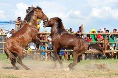 Filipinas, Mindanao, lucha del caballo fotos de archivo