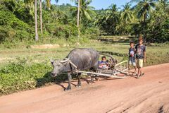 Free Filipino Children Transporting Firewood With A Buffalo Royalty Free Stock Images - 203146479
