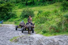Filipino farmers riding a water cow cart along the volcanic fiel Royalty Free Stock Images