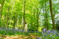 Filipino model in a blue bell wood Royalty Free Stock Image