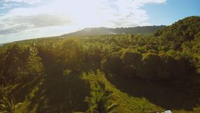 Filipino nature with palm trees. Aerial View. Filipino nature with palm trees. Aerial View stock video