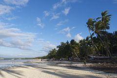 Filipino white sand beach in Bohol with shadows of coconut trees Stock Images