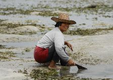 Philippine fishing. A filipino woman fishing in Digos Philippines Royalty Free Stock Images