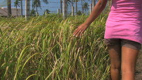 Filipino woman touching long grass with her hand stock footage
