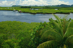 Filippijnse aard - mangroven stock fotografie