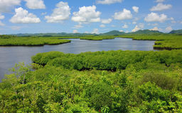 Filippijnse aard - mangroven stock foto's