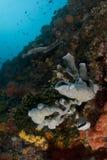 Filippijnse Zeedijk Stock Foto