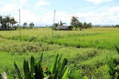 filippine Fotografie Stock Libere da Diritti