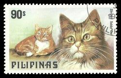 Filippine, gatti, soriano a strisce Fotografie Stock