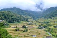 Filippine, terrazzi del riso nella valle Hapao immagine stock libera da diritti