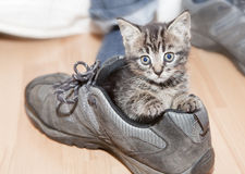 Fill My Shoes. Photograph of kitten a few wekks old in a shoe Royalty Free Stock Photography