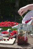 Fill pitted cherries in a canning jar Stock Images