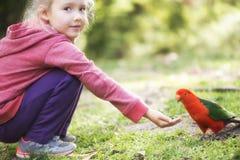 Fille alimentant le perroquet australien de roi Images libres de droits