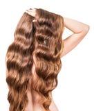 Fille avec de longs cheveux onduleux bruns d'isolement sur le fond blanc Photo libre de droits