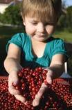 Fille avec des airelles rouges Photos stock