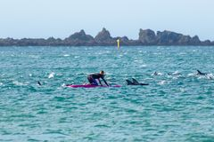 Fille avec des dauphins à la baie du Nouvelle-Zélande Lyall image stock