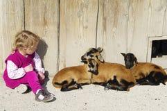 Fille avec l'agneau Photographie stock libre de droits