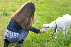 Fille avec la chèvre sur un pré Photographie stock