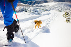 Fille avec le chien en montagnes d'hiver Photographie stock libre de droits