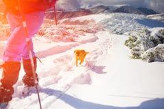 Fille avec le chien en montagnes d'hiver Photographie stock