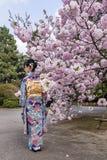 Fille avec le kimono près d'un cerisier dans la saison de fleur au printemps, Japon image libre de droits