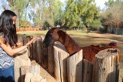 Fille avec le lama Photographie stock