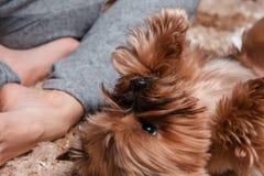 Fille avec le petit chien Photo stock